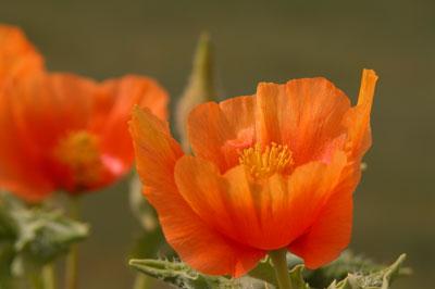 Придорожный цветок. Автор фото Завирюхина Мария (Масяня)